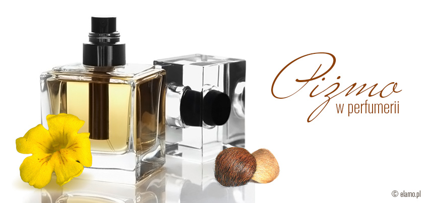 Piżmo - Buteleczka pefum piżma z kwiatem kroplika piżmowego i gruczołu piżmowca