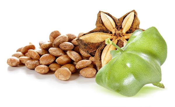 nasiona i owoce sacha inchi