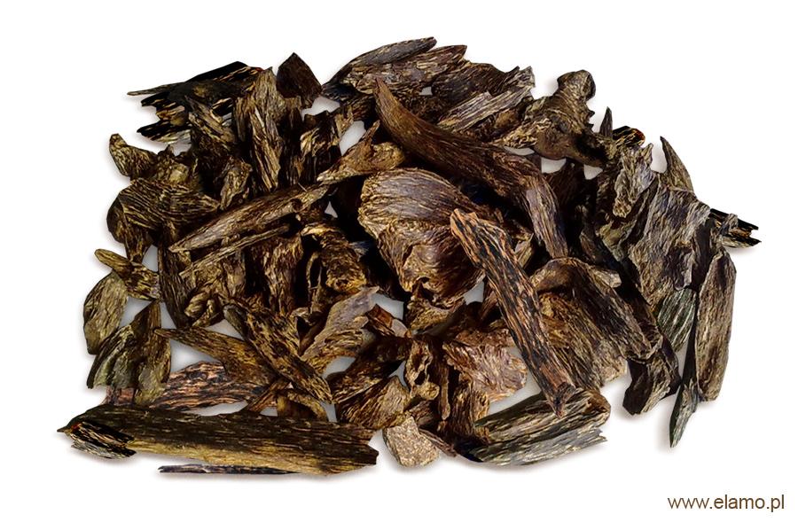 drewno agarowe